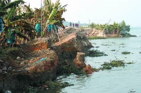香蕉树就种在堤旁